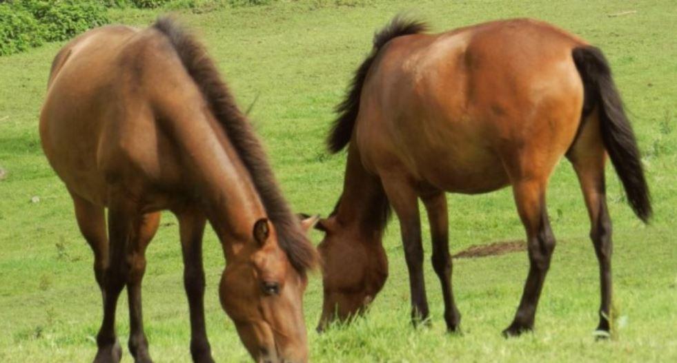 Traumdeutung pferd: Traumsymbole und ihre Bedeutung