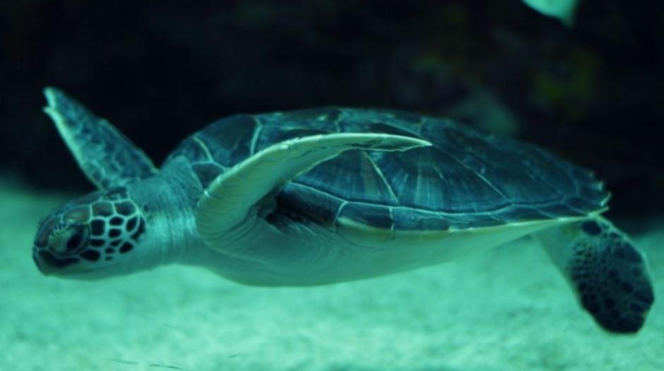 Traumdeutung schildkröte: Traumsymbole und ihre Bedeutung