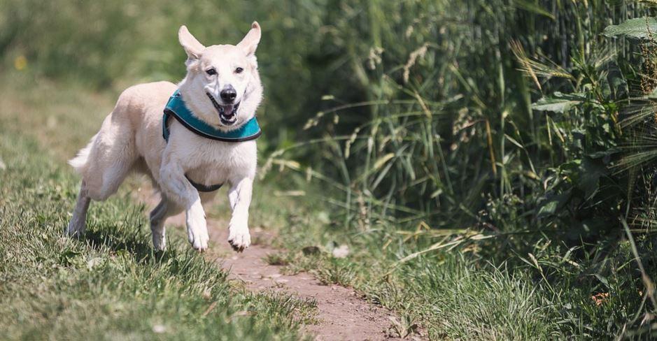 Traumdeutung weißer hund: Traumsymbole und ihre Bedeutung