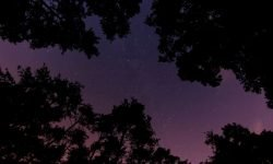 Horoskop: 7 Februar sternzeichen