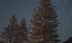 Horoskop: 12. November Sternzeichen