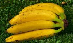 29 Gründe, warum Bananen so gesund sind