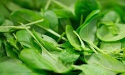 11 Gründe, warum Spinat so gesund ist